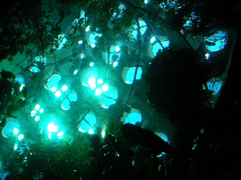 Underwater Looking Up.JPG - San Francisco