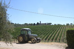 Photo of Florence Chianti Region Wine Tasting Half-Day Trip from Florence Vineyard