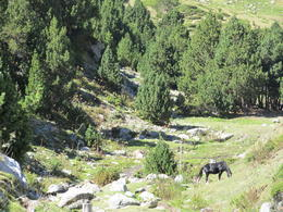 Hiking up from Val de Nuria resort, nice nature, fresh air and cows and horses wondering around. , rikifeld - September 2011