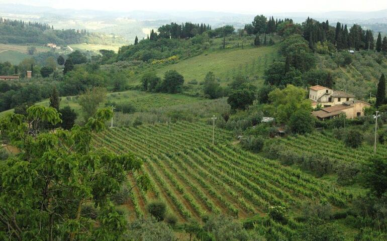 Siena and San Gimignano Tour from Florence - Florence