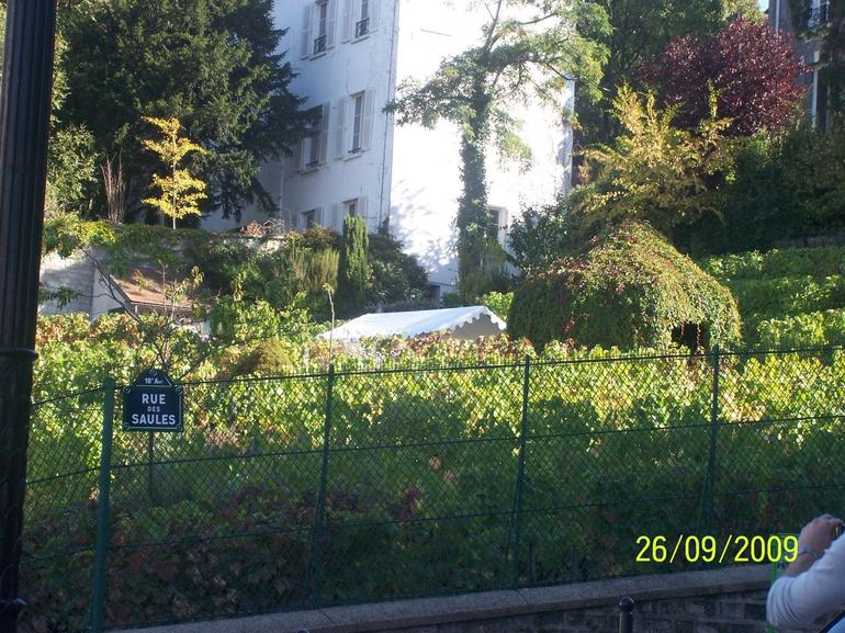 Vineyard in Montmartre Paris - Paris
