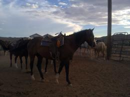 My beautiful horse!, Lovenwar - September 2012