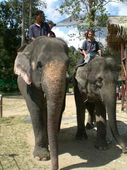 Photo of Kuala Lumpur Private Tour: Elephant Orphanage Sanctuary Day Tour from Kuala Lumpur Animals went in two by two