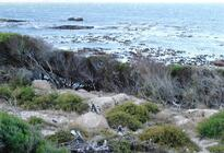 Photo of Cape Town Atlantic Coast