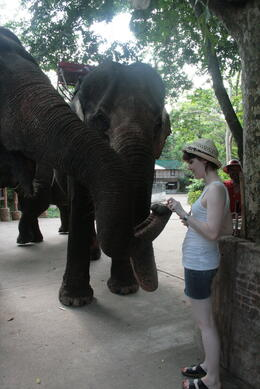 A wonderful experience to get so close to these beautiful animals whilst feeding them , Rodney H - June 2011