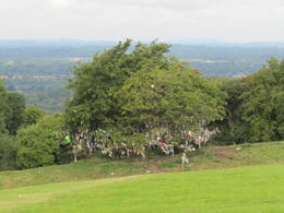 Photo of Dublin Newgrange and Hill of Tara Day Trip from Dublin Faerie Tree