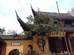 Photo of Shanghai Scholar-Led Shanghai Walking Tour: Buddhism in China Jade Buddha Temple