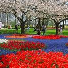 Photo of Amsterdam Keukenhof Gardens and Tulip Fields Tour from Amsterdam Trees & Flowers at Keukenhof