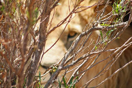 Photo of Cape Town Aquila Game Reserve Wildlife Safari from Cape Town I see you