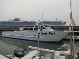Photo of San Francisco Whale Watching & Wildlife Eco Tour from San Francisco All aboard the Kitty Kat!
