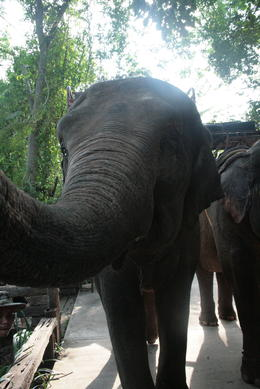 Photo of Bangkok Khao Yai National Park and Elephant Ride Day Trip from Bangkok Elephants