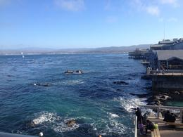 Photo of Monterey & Carmel Monterey Bay Aquarium Admission From the backside of the aquarium