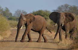 Close up view of two elephants. , JAMES S - August 2015