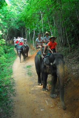 Photo of Phuket Phuket Half-Day Safari Tour Phuket Elephant Safari
