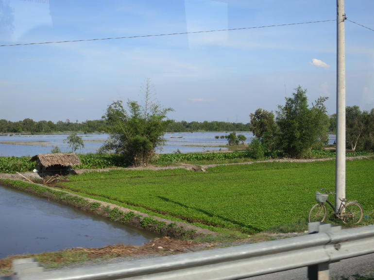 Rice fields - Ho Chi Minh City