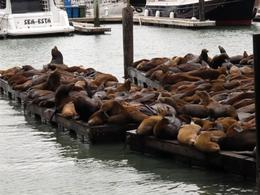 Photo of San Francisco PIER 39 Attraction Pass Sea Lions