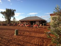 Photo of Ayers Rock Uluru Camel Express, Sunrise or Sunset Tours Uluru Camel Express, Sunrise or Sunset Tours
