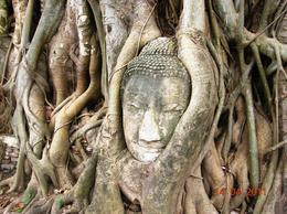 In the ruins of Wat Maha That located in Ayutthaya, a flourishing and prosperous capital of ancient Siam (Thailand), Buddha head engulfed by roots of a large tree. , TARA NATH R - May 2011