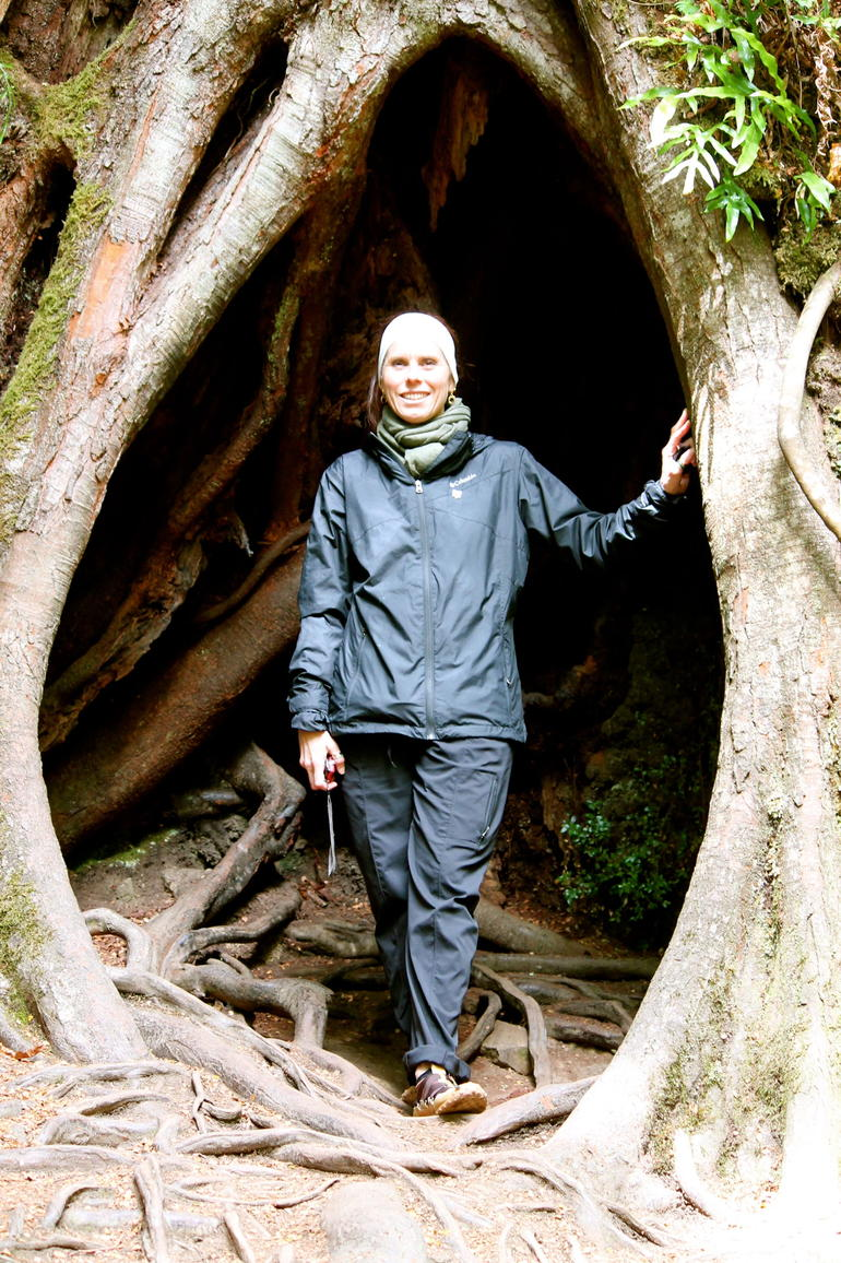Inside a really old tree -