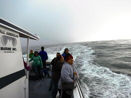 Photo of San Francisco Whale Watching & Wildlife Eco Tour from San Francisco Keeping a look out