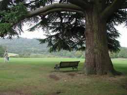 Photo of London Downton Abbey and Oxford Tour from London Including Highclere Castle Mary Crawley's favorite bench