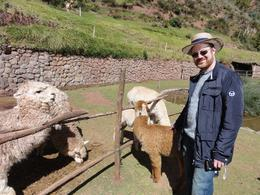 Photo of Cusco Sacred Valley, Pisac and Ollantaytambo Full-Day Tour from Cusco Sacred Valley animal park
