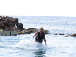 Photo of Ocho Rios Ocho Rios Dolphin Swim Dolphin Cove, Jamaica