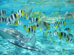 Photo of Bora Bora Bora Bora Snorkel, Sharkfeeding and Lagoonarium Full-Day Tour including Picnic Lunch IMG_0134