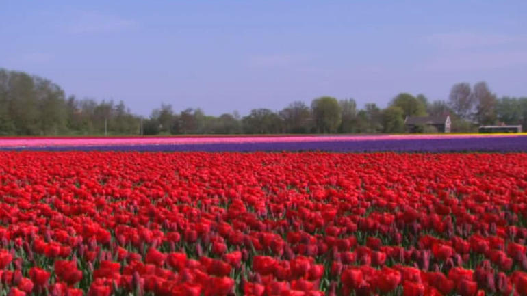 Keukenhof Gardens and Tulip Fields Tour from Amsterdam - Amsterdam