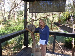 I love Koalas, and petting them or holding them is always very special. , Bridget F - October 2013