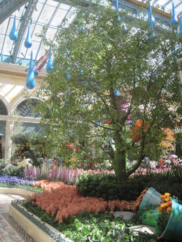 Inside the glass house - the spring garden theme. , Lynne B - June 2013