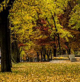 Photographing Fall in Commonwealth Ave Mall, Boston. , Hilton - December 2013