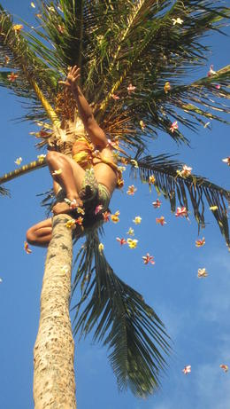 Flowers rain down from the top of a coconut tree. , Mariangela M - August 2012