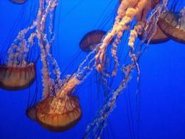 Photo of Monterey & Carmel Monterey Bay Aquarium Admission Jellyfish!