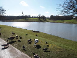 Photo of London Leeds Castle, Canterbury Cathedral and Dover Feathered friends at Leeds Castle