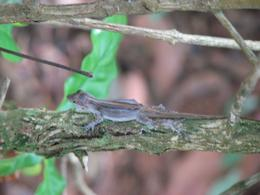 On a hike through the rain forest our guide pointed out this critter. - August 2009