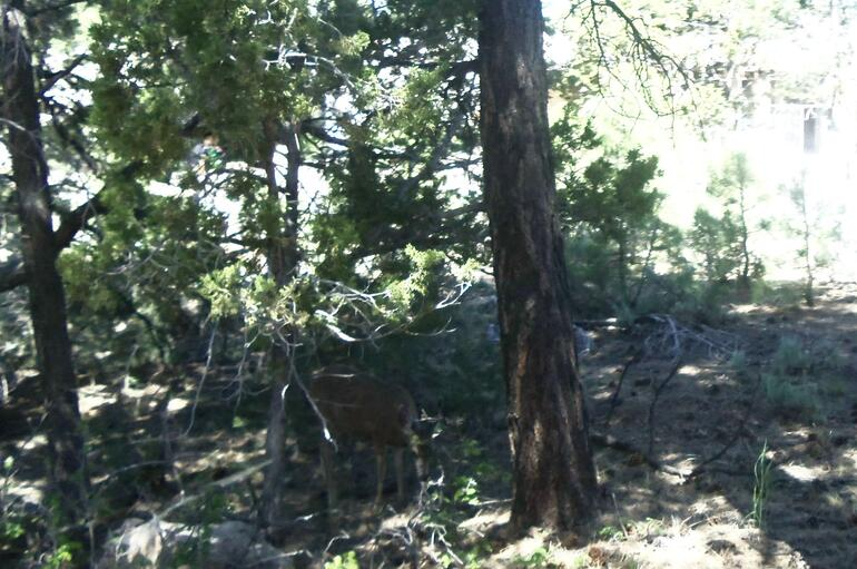 Can you spot the deer? - Las Vegas