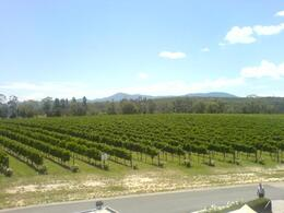 Photo of Melbourne Yarra Valley Wine and Winery Tour from Melbourne Domaine Chandon Vines