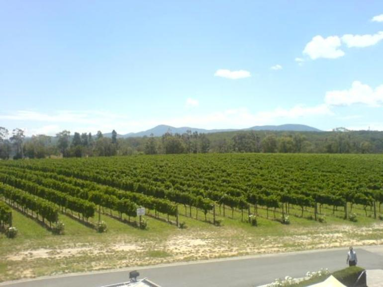 Domaine Chandon Vines - Melbourne