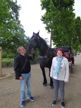 Getting to know our horse , lozz - May 2015