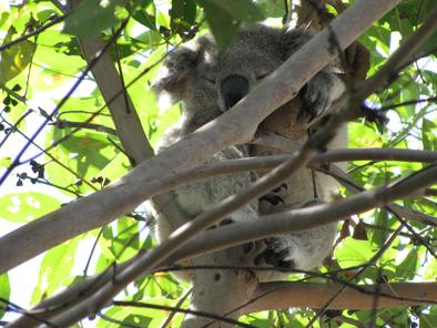 taronga-zoo-photo_989416-fit468x296.jpg