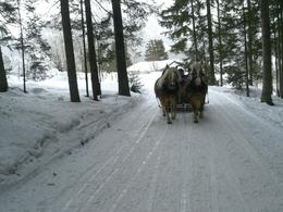 Photo of Salzburg Christmas Horse-Drawn Sleigh Ride from Salzburg The sleigh behind us