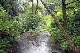 The water thru the green wood is beautiful., LaDonna M E - June 2010