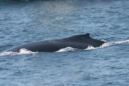 Photo of Boston Boston Whale Watching Cruise Boston Whales