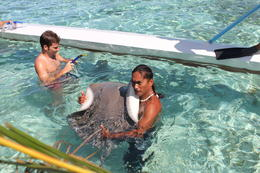 Photo of Bora Bora Bora Bora Snorkel, Shark and Ray Feeding Excursion IMG_6399.JPG