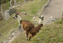 Photo of Cusco Machu Picchu Day Trip from Cusco