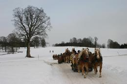 Photo of Salzburg Christmas Horse Drawn Sleigh Ride from Salzburg My husband's perfect shot