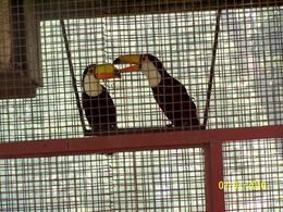 Photo of Buenos Aires Gaucho Day Trip from Buenos Aires: Don Silvano Ranch Toucans