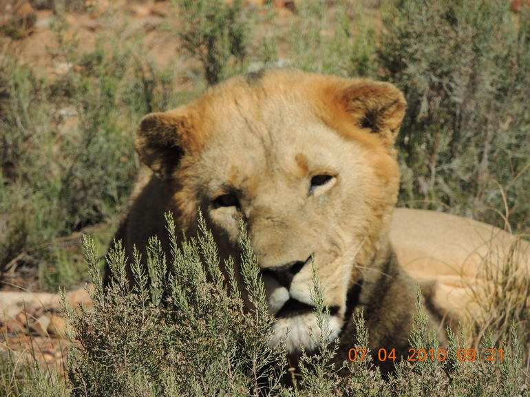 Aquila Game Reserve - Cape Town
