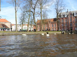 View from the canals - Amazing story about the swans! , Missuly E - April 2013